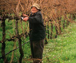 Barrecas Wines