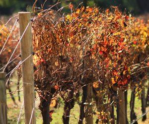 Mandalay Road Wines