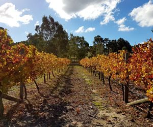 Henty View Vineyard