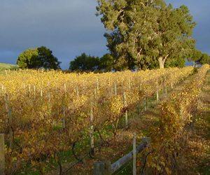 Thomson Brook Wines